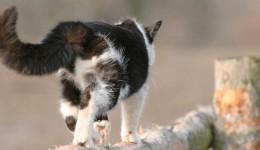 Wenn Katzen abwandern