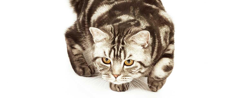 Aggressive Katzen