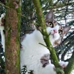 Fiona, europäische Hauskatze, 3½ Jahre Fiona klettert gern auf Bäume um den Überblick zu behalten.