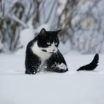 Mauzi macht der viele Schnee überhaupt nichts aus.