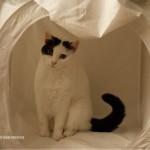 mein lichtwürfel zum fotografieren sieht aus wie ein katzenzelt - also mussten vanni und milli den würfel *testen*