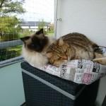 Benji und Siri geniessen das schöne Herbstwetter auf dem Balkon