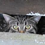 Finn, europäische Hauskatze, 6 Monate Hier versteckt Finn sich vor Wind und Schneefall.