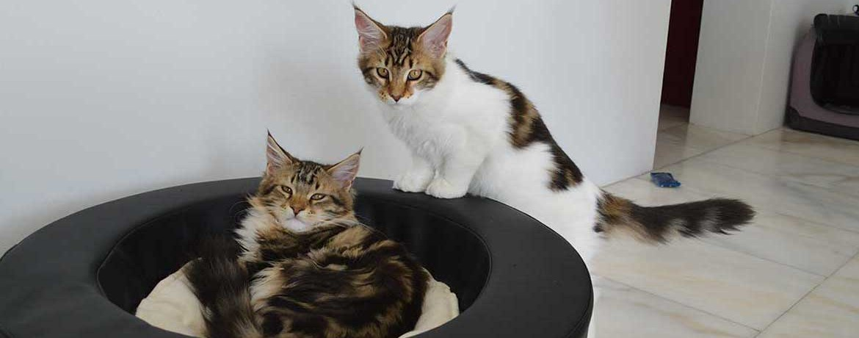 Cat-Trend-Line Hängemattenbett mit Alcantarakissen