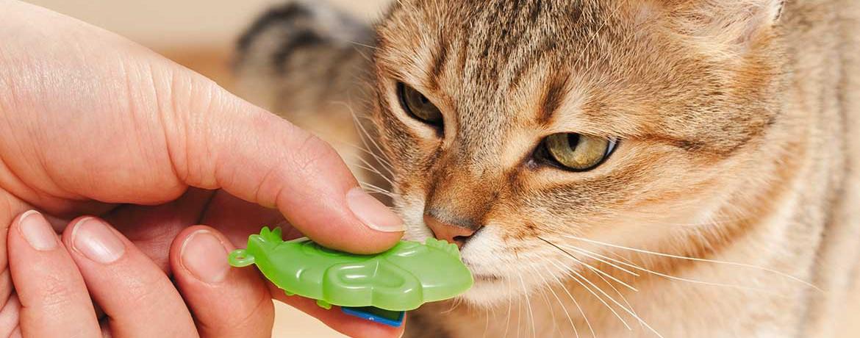 Mit Katzen klickern