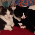 Geschwisterliebe: Momo und Gismo lieben sich sehr