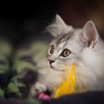Eins unserer Deutsch Langhaar Kätzchen das in der Schweiz lebt.