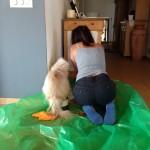 Unser 1-jähriger Perserkater Yani überwacht meine Shabby-Chic Malerarbeiten.