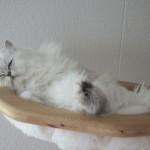 Sascha beim Mittagsschlaf!!!!