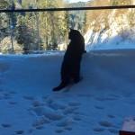 Samira erkundet die Umgebung im frischen Schnee