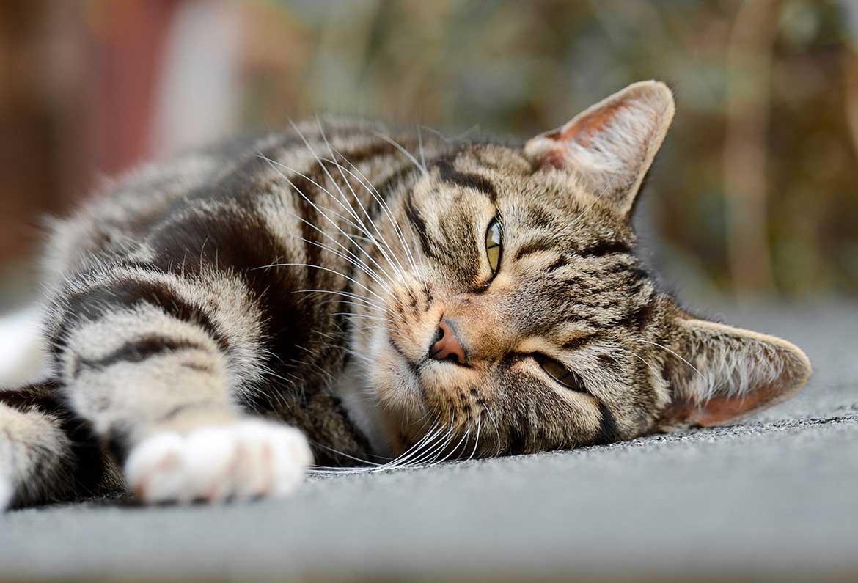 vorderbeine katze zittern