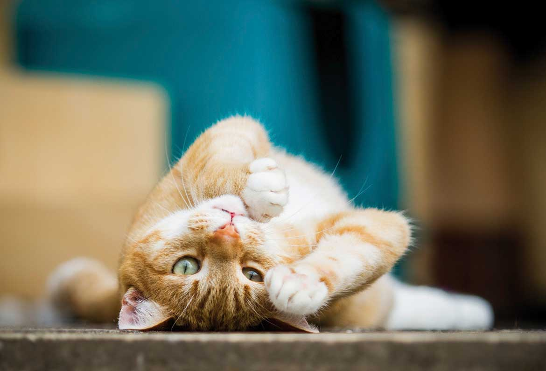 katzen machen ins beet