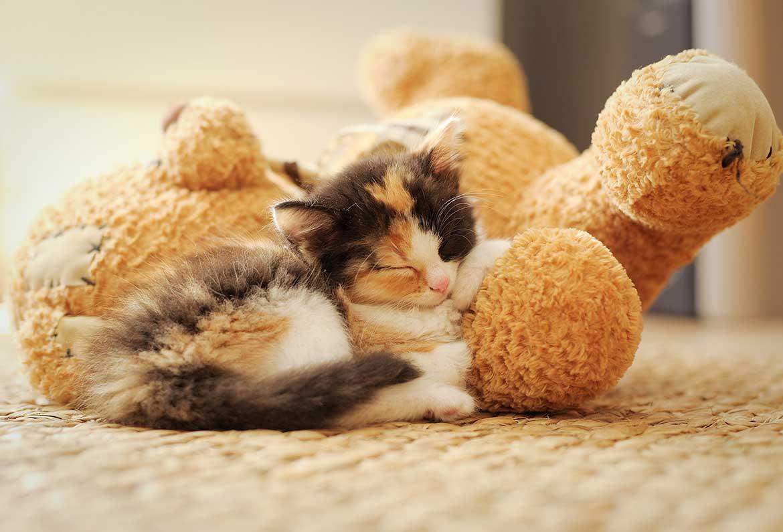 babykatzen raus lassen