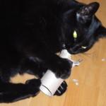Chichi liebt leere WC Papierrollen. Das Karton fliegt in abgebissenen Stückchen durch die Luft. Sie ist eine Hauskatze, die als klein durch den Tierschutz in der Wildnis gefangen und sterilisiert wurde. Das Alter ist ca. 6 Jahre. Sie hat sich super eingelebt und ist eine verschmuste liebe Katze!