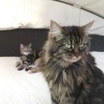 Hinten Gina 9 Jahre alt & Fini 4 Jahre.. Ganz normale Hauskatzen zum knuddeln :) <3<3