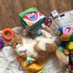 Die Babyspielsachen bereiten nicht nur den Babys Freude. Momo liebt das Spiel damit genau so!