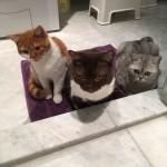 Nach dem spannenden Wassertropfen-Fangen an dee Glastüre der Dusche begrüssen uns unsere drei Katzen Joy, Niky und Momo vor der Dusche.:-)