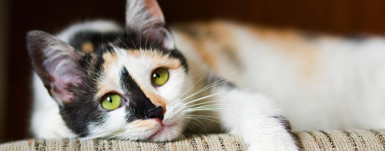 Die Fellfarben Bei Der Katze Teil 3 Rot Schildpatt Und Point