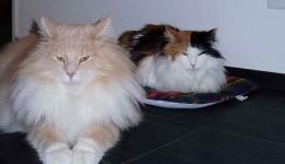 Sissy & Scotty