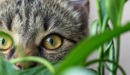 Katze hinter eine Pflanze