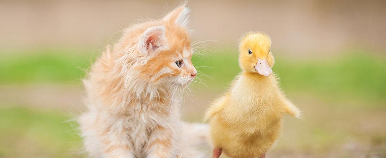 Ungew 246 Hnliche Tierfreundschaften Katzen Magazin