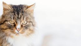 Einstieg_Katzenpsyhce