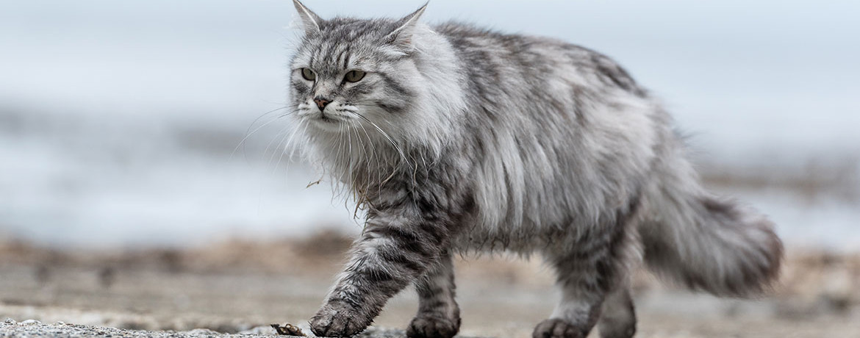 Stoffwechsel und Ernährung Teil 1 / Der Stoffwechsel der Katze ...