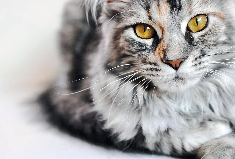 ab wann kann man katzen raus lassen