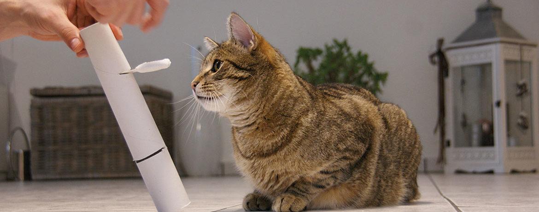 Intelligenzspielzeug Eine Spielidee Für Schlaue Katzen Katzen