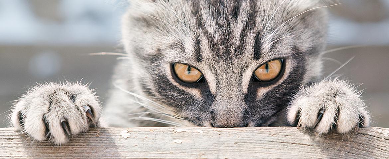 Mobbing unter Katzen