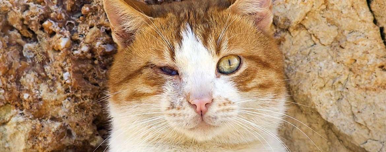 Blinde Katze