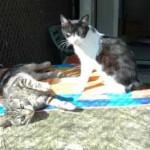 LEO & MIRA, 9 Monate